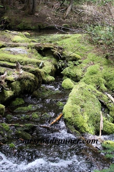 Cascades_tagged_468