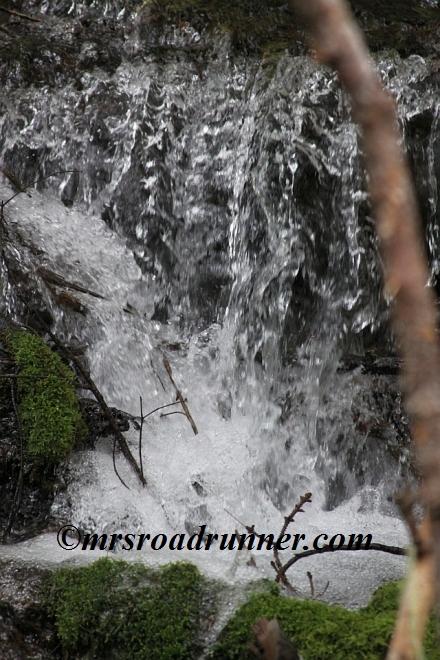 Cascades_tagged_481