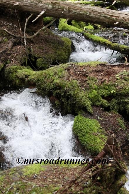 Cascades_tagged_594