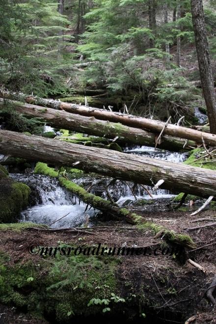 Cascades_tagged_659