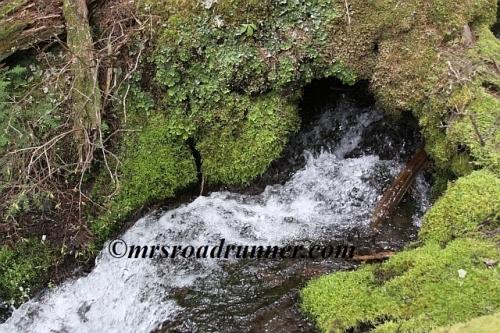 Cascades_tagged_768