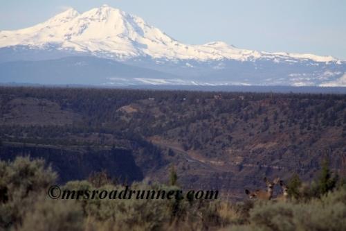 Mule_deer_sisters_mountains_tagged_274